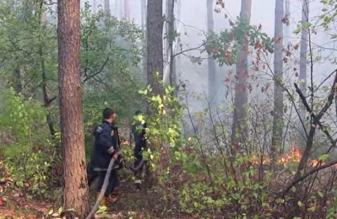 Forest fires encircled Kyiv, sulfur dioxide levels exceed norm by 5.8 times – officials