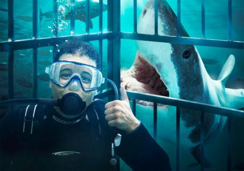 Who likes heavy metal? Sharks, that's who (VIDEO)