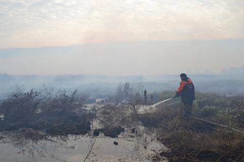 Firefighters extinguish peat fires at 14 locations outside Kyiv
