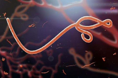 Two new Ebola cases in Guinea, WHO says