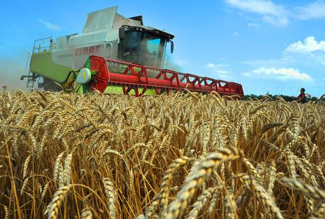 Ukraine harvests 57.1 mln tonnes of grain by Nov 6