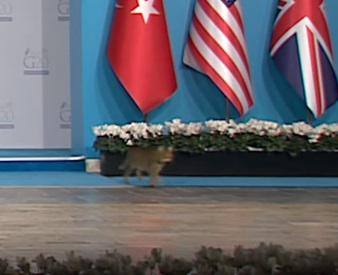 Cats caught on camera strolling G20 Antalya summit (VIDEO)