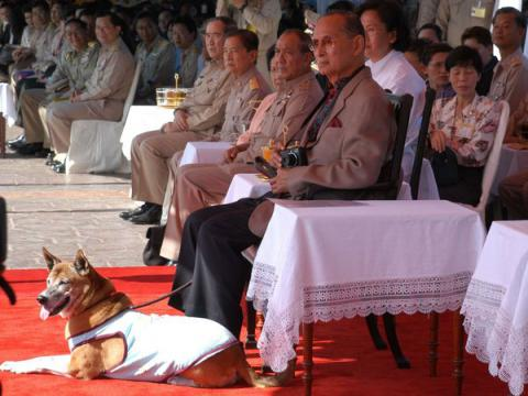 Thai man charged for insulting king's dog