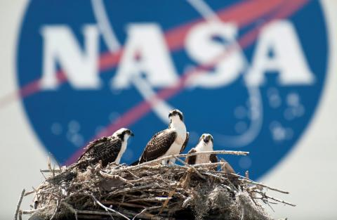 NASA cancels launch of next Mars probe due to instrument leak