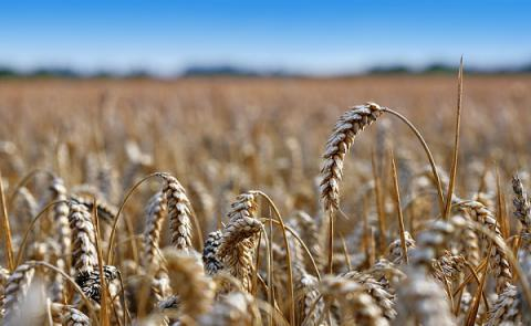 Grain prices on Ukrainian market increased since start of 2016 - Agricultural Policy and Food Ministry