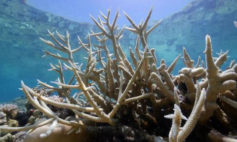 Mass coral bleaching now affecting half of Australia's Great Barrier Reef