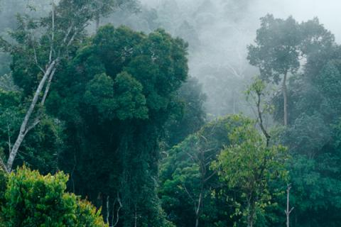 Forests re-grown on cleared lands in LatAm key for climate, land rights - Study