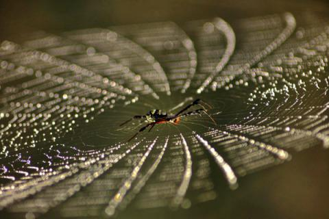 Scientists created wire that acts like spider's web