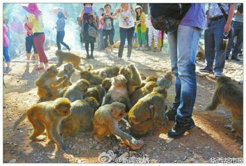 600 monkeys terrorize Chinese village after tourism project failed