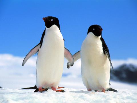 Temperature warming kills penguins