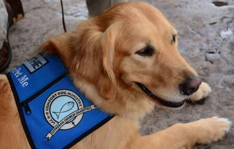 These golden retrievers provide comfort to disaster victims