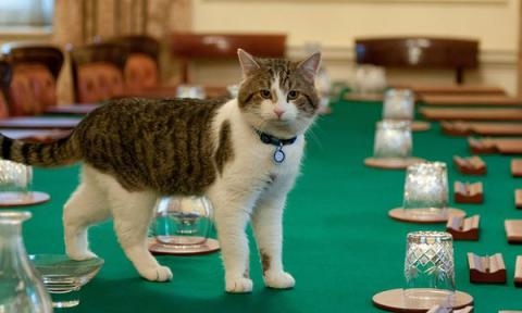 Larry the cat to remain at Number 10 Downing Street, when Cameron family leave
