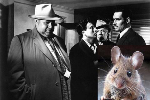 Mouse watches thriller movie to help scientists understand how brain works (VIDEO)