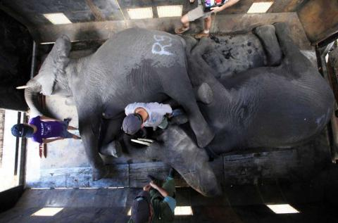 How to move 500 elephants to new location? With crane and truck (PHOTO, VIDEO)