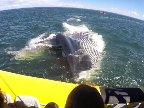 Finback whale swims very close to boat full of tourists (VIDEO)