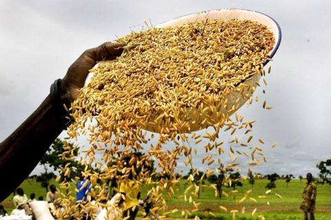 World food prices fall in July after five months increasing