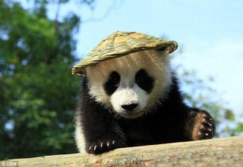 """""""Panda"""" is hacking Brazilian banking system"""