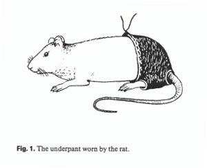 Scientist who put trousers on a rat awarded Ig Nobel prize