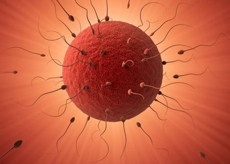 Fertility genes required for sperm stem cells