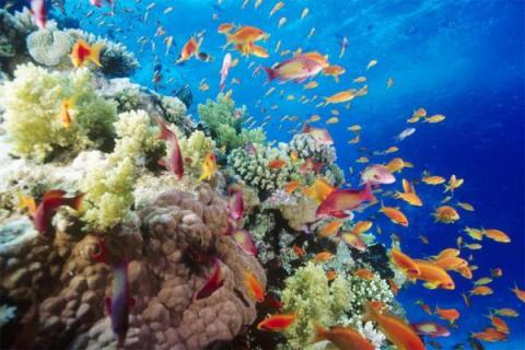 Australian govt seeks $ 90m from owners of Chinese ship that damaged Great Barrier Reef