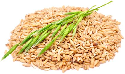 Eating oats can lower cholesterol as measured by a variety of markers, review suggests