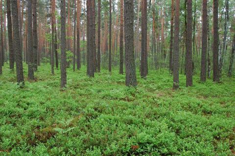 Transfer of municipal forest parcel to Firtash's enterprise in Zhytomyr region was unlawful - Ukrainian court