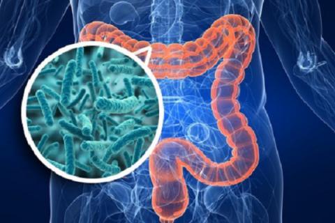 Intestinal diversity protects against asthma