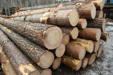 Ukraine seeks to settle issue with EU ban on round timber exports