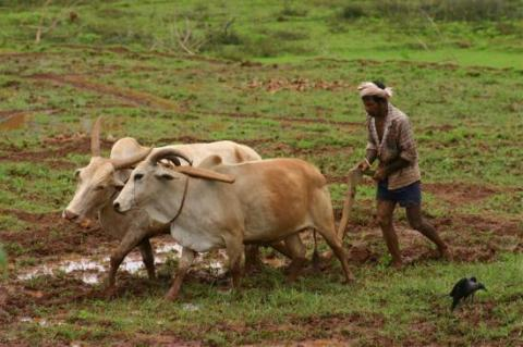 India is helping farmers hit by black money crackdown