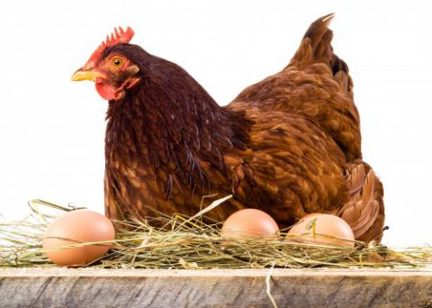 Leading egg producer in Ukraine seeks to by poultry farm in Poland
