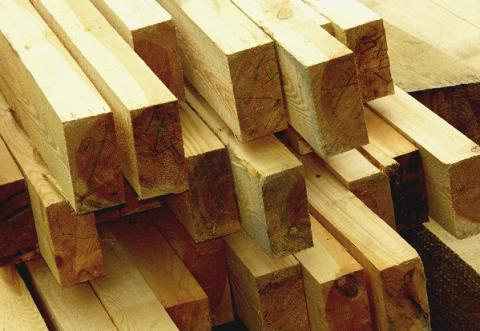 Timber production, processing in Ukraine stay mostly in shadows - Report