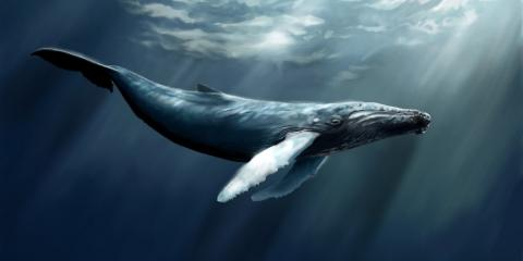 UN addresses issue of whale-ship collisions