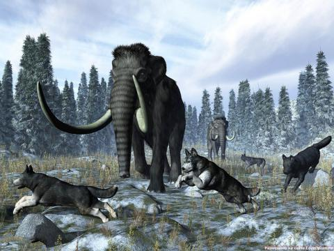 Harvard Scientists Promise to Resurrect Woolly Mammoth/Elephant Hybrid