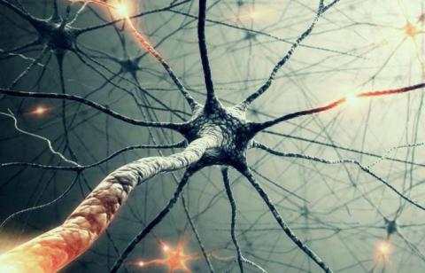 Scientists Just Found Evidence That Neurons Can Communicate in a Way We Never Anticipated