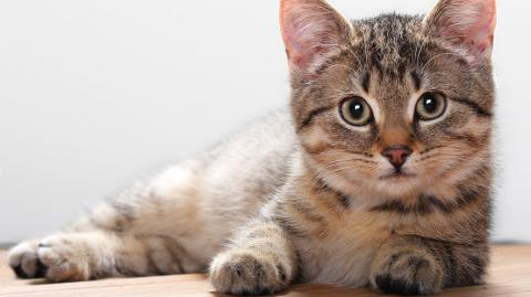 There's no link between cats and mental health problems