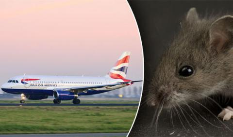 Mouse caused 4 hours delay of flight from London to San Francisco